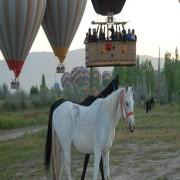 HORSE RİDİNG