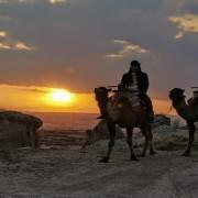 Cappadocia Camel Safari
